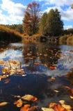 Paesaggio di autunno, Russia Immagine Stock