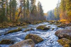 Paesaggio di autunno su un fiume della foresta Immagini Stock