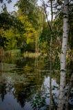 Paesaggio di autunno su un lago in Russia centrale Fotografie Stock