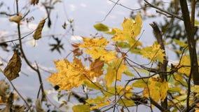 Paesaggio di autunno sul lago stock footage