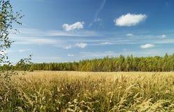 Paesaggio di autunno in terreno boscoso Fotografia Stock Libera da Diritti
