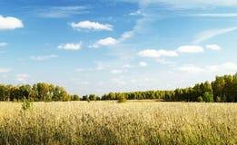 Paesaggio di autunno in terreno boscoso Fotografia Stock