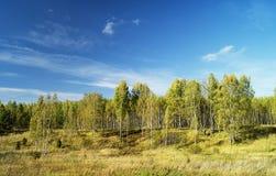 Paesaggio di autunno in terreno boscoso Fotografie Stock