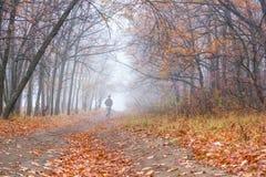 Paesaggio di autunno - trotto di mattina sulla strada non asfaltata nella foresta di autunno fotografia stock