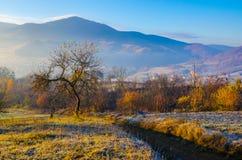 Paesaggio di autunno, un albero senza foglie, iny sull'erba verde, Fotografie Stock