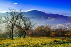 Paesaggio di autunno, un albero senza foglie, iny sull'erba verde, Immagini Stock Libere da Diritti