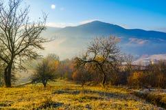 Paesaggio di autunno, un albero senza foglie, iny sull'erba verde, Immagine Stock Libera da Diritti