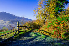 Paesaggio di autunno, un albero senza foglie, iny sull'erba verde, Immagini Stock