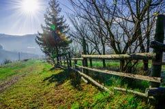 Paesaggio di autunno, un albero senza foglie, iny sull'erba verde, Immagine Stock