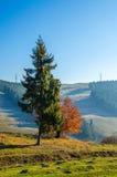 Paesaggio di autunno, un albero senza foglie, iny sull'erba verde, Fotografia Stock