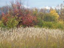 Paesaggio di autunno un giorno pieno di sole Fotografia Stock