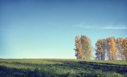 Paesaggio di autunno in un giorno soleggiato con gli alberi di betulla e la m. Immagini Stock Libere da Diritti