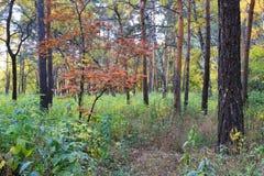 Paesaggio di autunno - in una foresta mista Immagini Stock
