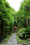 Paesaggio di bambù asiatico Fotografia Stock