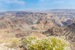 Paesaggio di bello canyon del fiume del pesce con i fiori selvaggi bianchi che fioriscono nella priorità alta, Namibia, Africa me Fotografia Stock