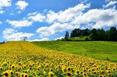 Paesaggio di Biei, Hokkaido. Immagini Stock Libere da Diritti
