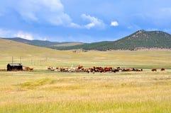 Paesaggio di Buryat della steppa Immagine Stock Libera da Diritti