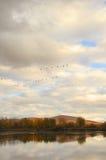 Paesaggio di caduta con i gooses 3 di volo Fotografia Stock Libera da Diritti