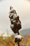 Paesaggio di caduta con neve 5 Fotografia Stock Libera da Diritti