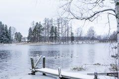 Paesaggio di calma di inverno su un fiume con cigni e pilastro bianchi La Finlandia, fiume Kymijoki fotografia stock libera da diritti