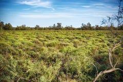 Paesaggio di Camargue Fotografia Stock
