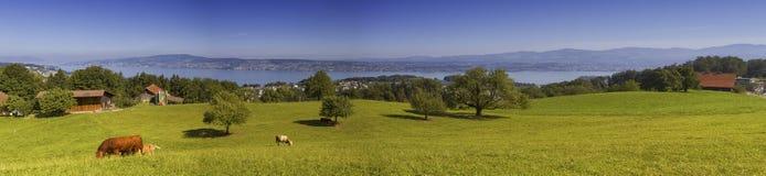 Paesaggio di cantone di Zurigo, Svizzera Immagine Stock Libera da Diritti