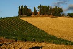 Paesaggio di Chianti Fotografia Stock