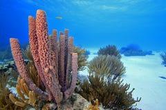 Paesaggio di corallo Fotografia Stock