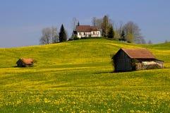 Paesaggio di Dandelium Fotografia Stock Libera da Diritti