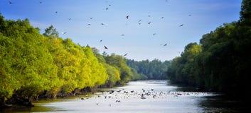 Paesaggio di delta del Danubio