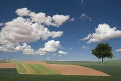Paesaggio di estate Fotografia Stock