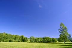 Paesaggio di estate Immagine Stock Libera da Diritti