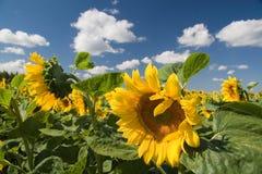 Paesaggio di estate. Immagine Stock
