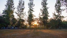 Paesaggio di estate ad alba pini che crescono in un campo ed in una s Immagine Stock Libera da Diritti