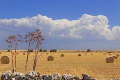 Paesaggio di ESTATE Alta Murgia National Park: balle della paglia nei campi di grano raccolti - (Puglia) l'ITALIA Immagini Stock Libere da Diritti