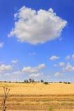 Paesaggio di ESTATE Alta Murgia National Park: fattorie abbandonate nei giacimenti di grano L'Italia (Puglia) Immagine Stock