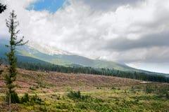 Paesaggio di estate con abbattimento della foresta nella priorità alta contro lo sfondo delle montagne alto Tatras Immagine Stock Libera da Diritti