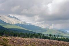 Paesaggio di estate con abbattimento della foresta nella priorità alta contro lo sfondo delle montagne alto Tatras Fotografia Stock Libera da Diritti