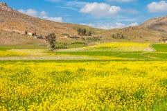 Paesaggio di estate con cielo blu e grano verde Fotografia Stock Libera da Diritti