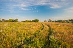 Paesaggio di estate con erba verde Immagini Stock Libere da Diritti