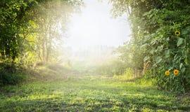 Paesaggio di estate con erba verde e gli alberi, con luce solare luminosa fotografia stock