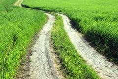 Paesaggio di estate con erba verde e la strada Immagini Stock Libere da Diritti