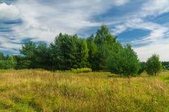 Paesaggio di estate con gli alberi nel campo Fotografia Stock Libera da Diritti