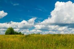 Paesaggio di estate con gli alberi nel campo Immagine Stock