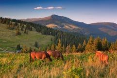 Paesaggio di estate con i cavalli Immagini Stock
