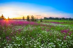 Paesaggio di estate con i fiori su un prato e su un tramonto Fotografia Stock