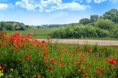 Paesaggio di estate con i papaveri rossi luminosi nella priorità alta e nella b Fotografie Stock Libere da Diritti