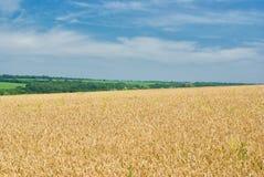 Paesaggio di estate con i raccolti Immagine Stock Libera da Diritti