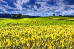 Paesaggio di estate con il campo Fotografia Stock Libera da Diritti