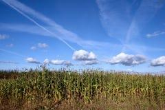 Paesaggio di estate con il campo e le nubi di frumento Fotografie Stock